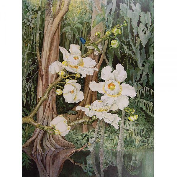 MARGARETH MEE (Chesham, 1909 Seagreve (Leicestershire), 1988) - Álbum - Flowers of the Amazon.