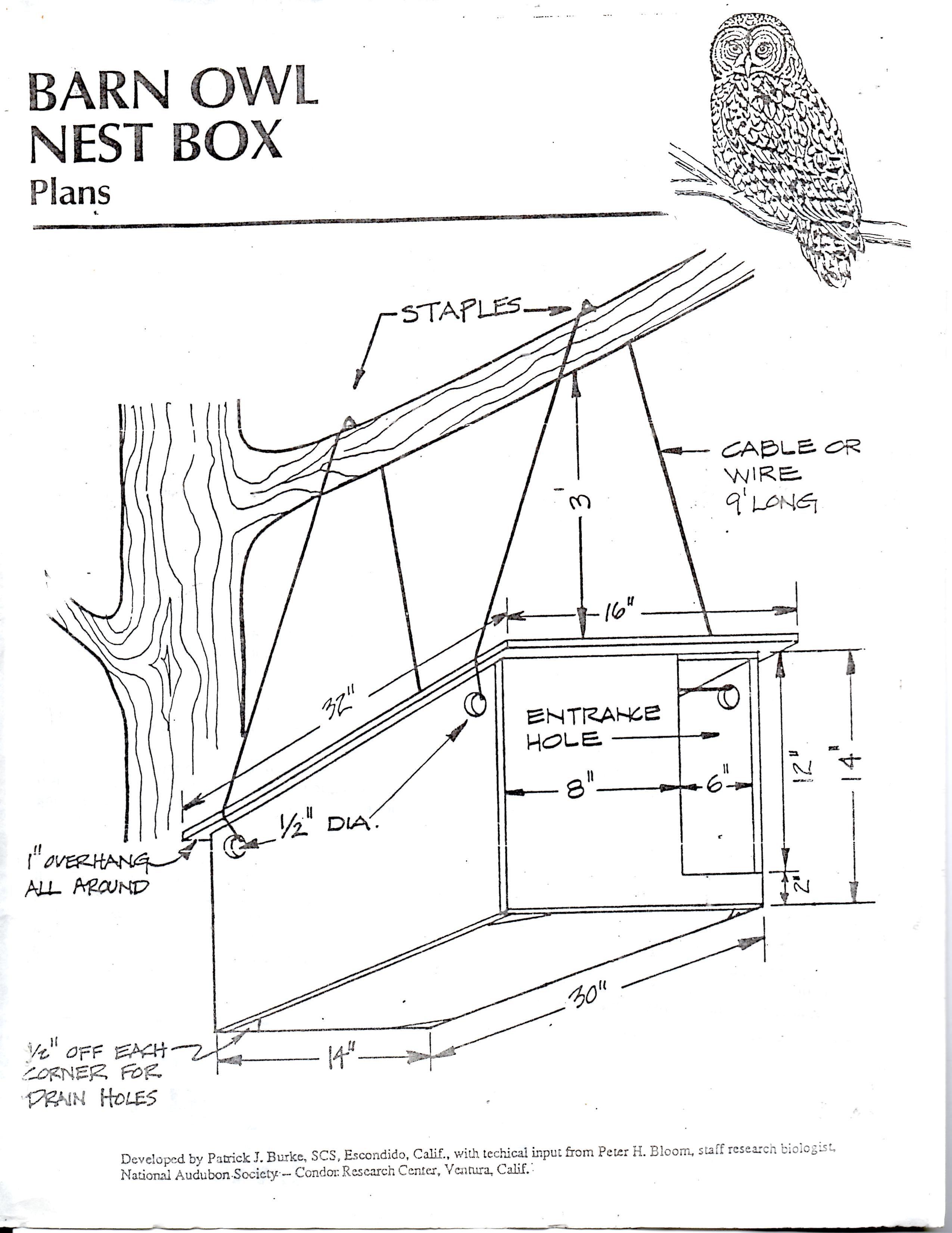 Diy Barn Owl Nesting Box Plans Pg 1 Owl Nesting Barn Owl Owl Box