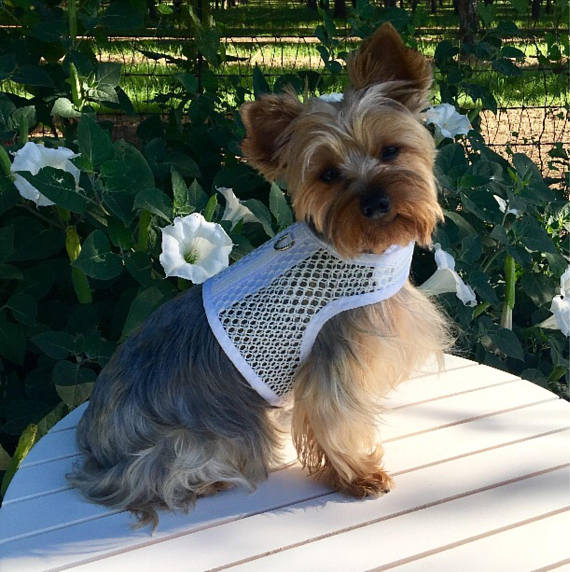 Small Dog Harness, Breathable white mesh, Made in USA, dog harnesses