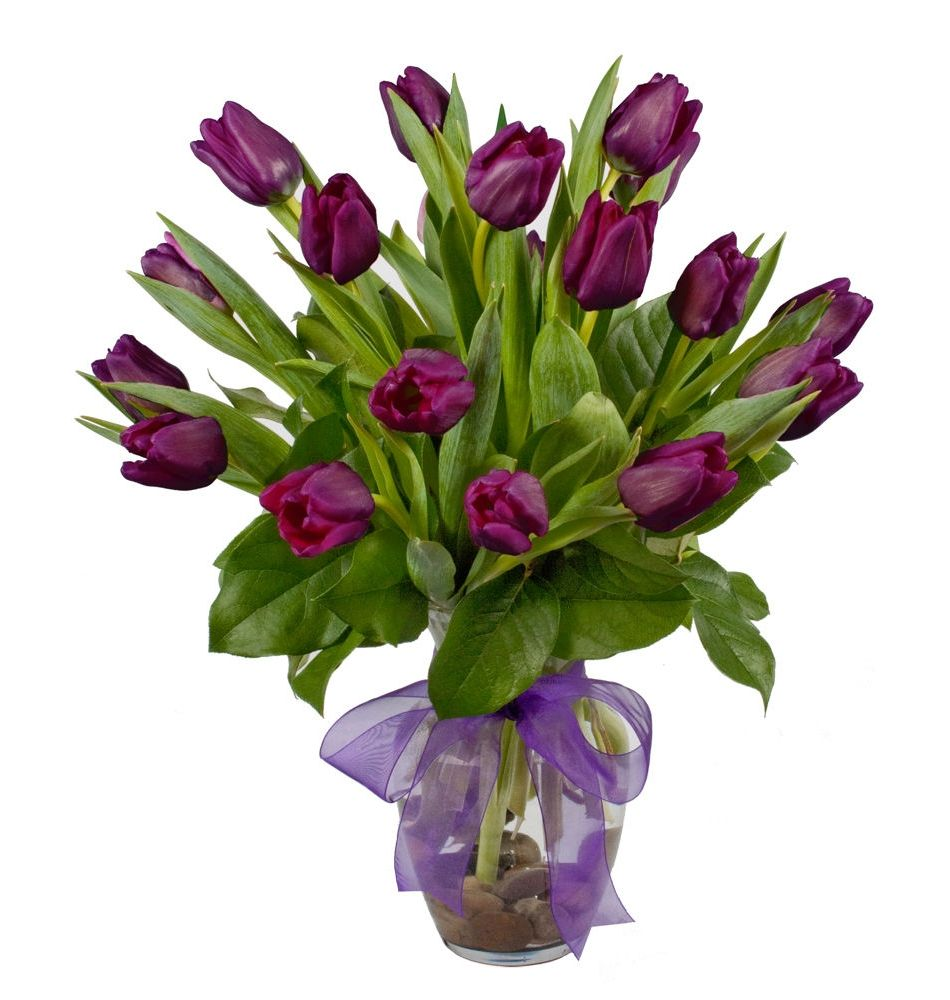 Purple Passion Freytags Florist Happy February Birthday