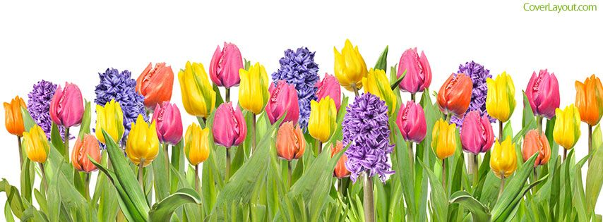 Spring Flowers Facebook Cover Coverlayout Com Spring Cover