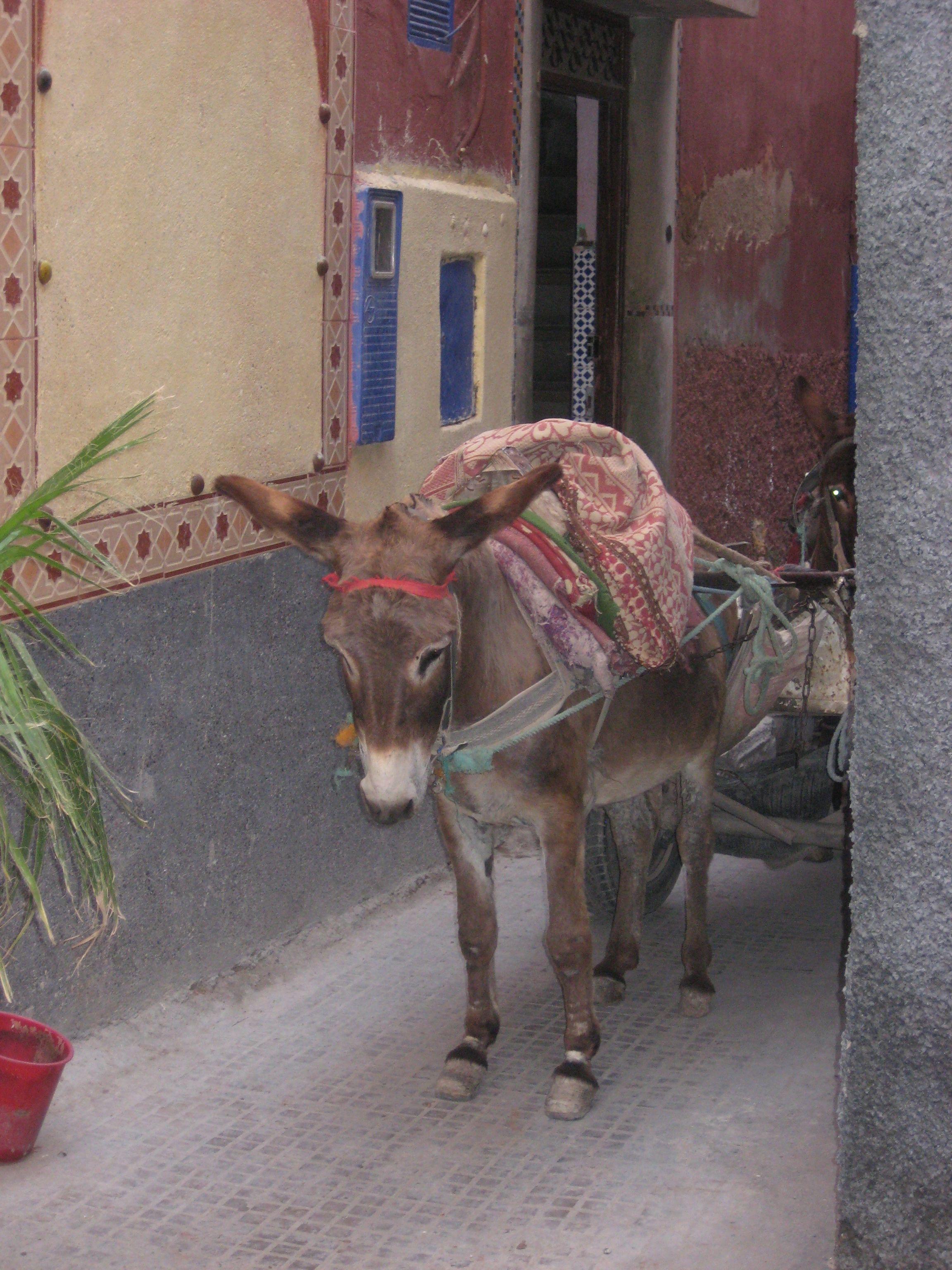 Cute, depressed donkey!