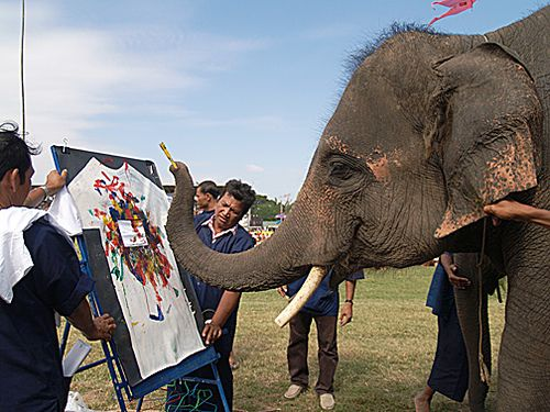 photographersdirectele3A | Elephant Artist! Surin, Thailand | Flickr