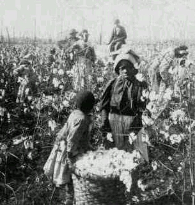 Facts and articles about black slaves in the america