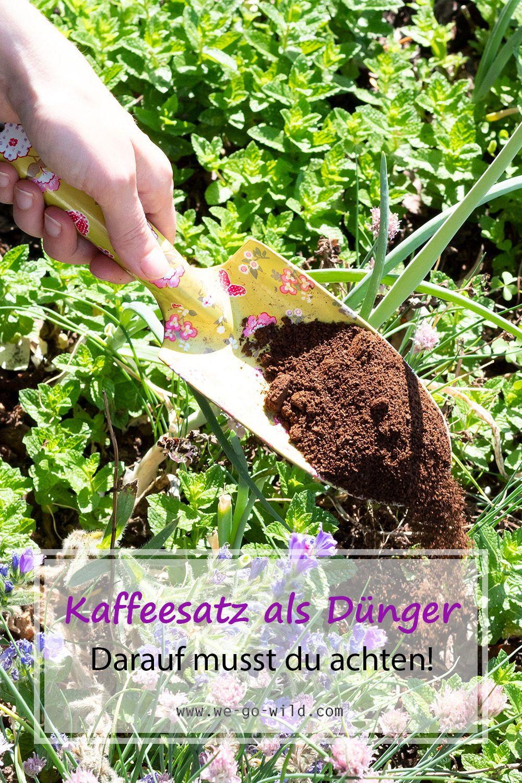 Kaffeesatz Als Dunger Fur Garten Und Topfpflanzen We Go Wild Pflanzen Garten Pflanzen Kaffeesatz
