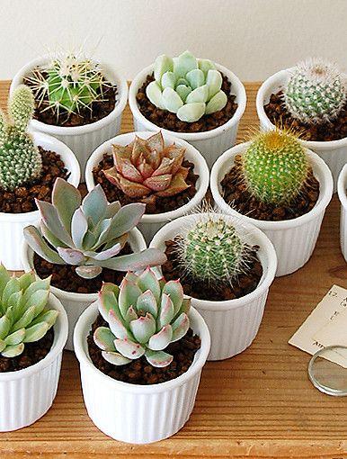 des succulentes dans des ramequins petite maison rustique pinterest plantes cactus et. Black Bedroom Furniture Sets. Home Design Ideas
