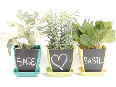 Chalk Pot Herb Kit Any Indoor Growing Would Be Fantastic I Love To Have Some Herbs On My Windowsill