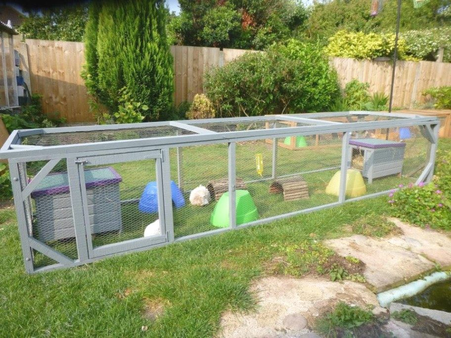 Pin On Guinea Pigs And Cages
