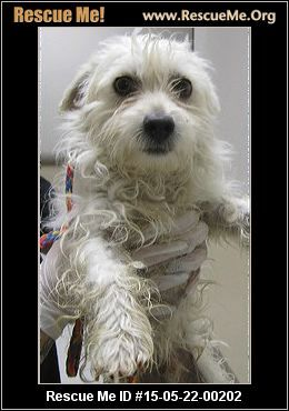 Facebook: Email to Friend Problems/Corrections Mark As Unavailable Rescue Me ID: 15-05-22-00202Salty Dawg (male) Maltese Mix Age: Puppy Health: Neutered, Vaccinations Current DATE DOG IS COMING TO 1st EVENT: 05/26 ADOPTION FEE IS: 210.00 APPROXIMATE WEIGHT: 10 lbs APPROXIMATE AGE: 1 yr Adoption fee includes spay/neuter, age appropriate vaccines and microchip. This pup will be at Petco Lakewood on: TUESDAY SPECIAL EVENT 4pm-7pm-YAPPY HOUR SPECIALS Friday 4pm-7pm Saturday 11am-3pm (address is…