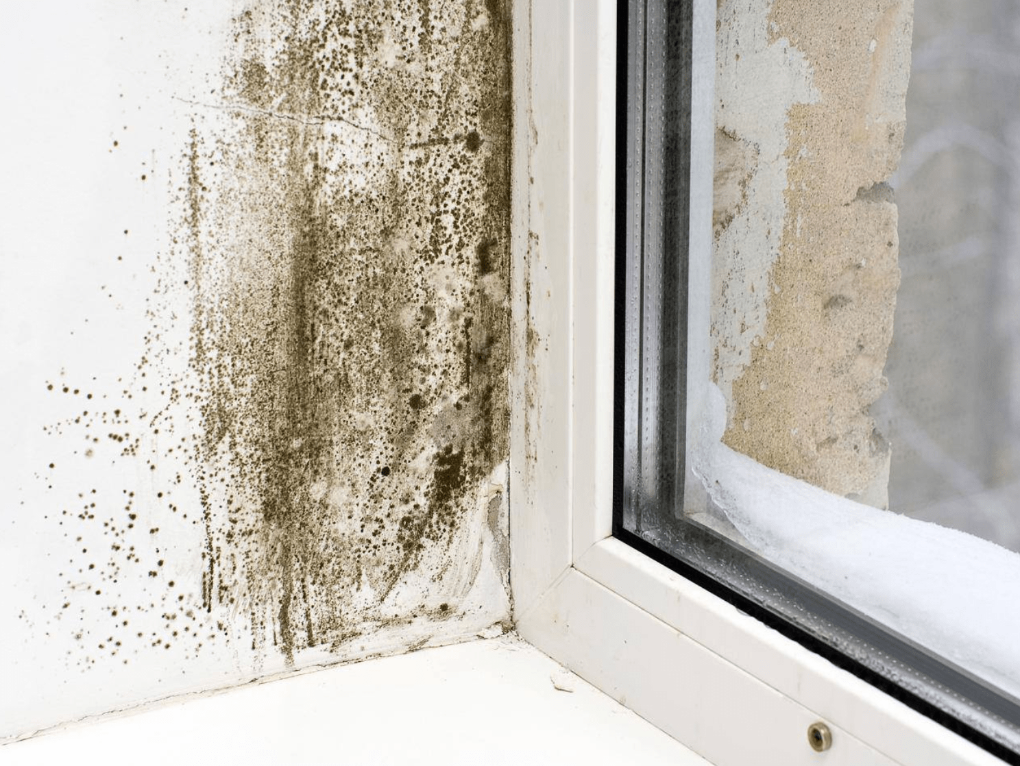 Watch Out For Common Signs Of Mold Www Buildingworks In 2020 Mold On Window Sills Musty Smell In House Mold Remover