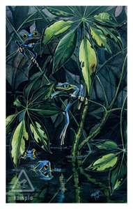 Limited Edition Fine Art Frog Prints from Rob