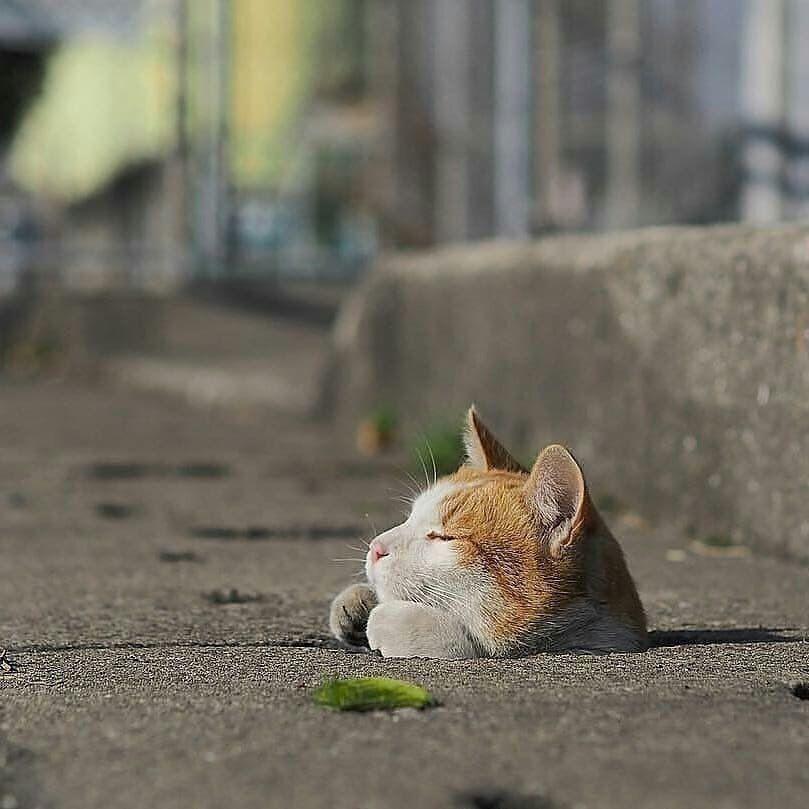 Bodega Cats On 画像あり ペット用品 愉快な動物 おもしろい猫