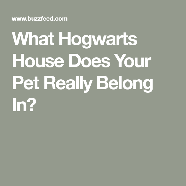 What Hogwarts House Does Your Pet Really Belong In Hogwarts Hogwarts Houses Pets