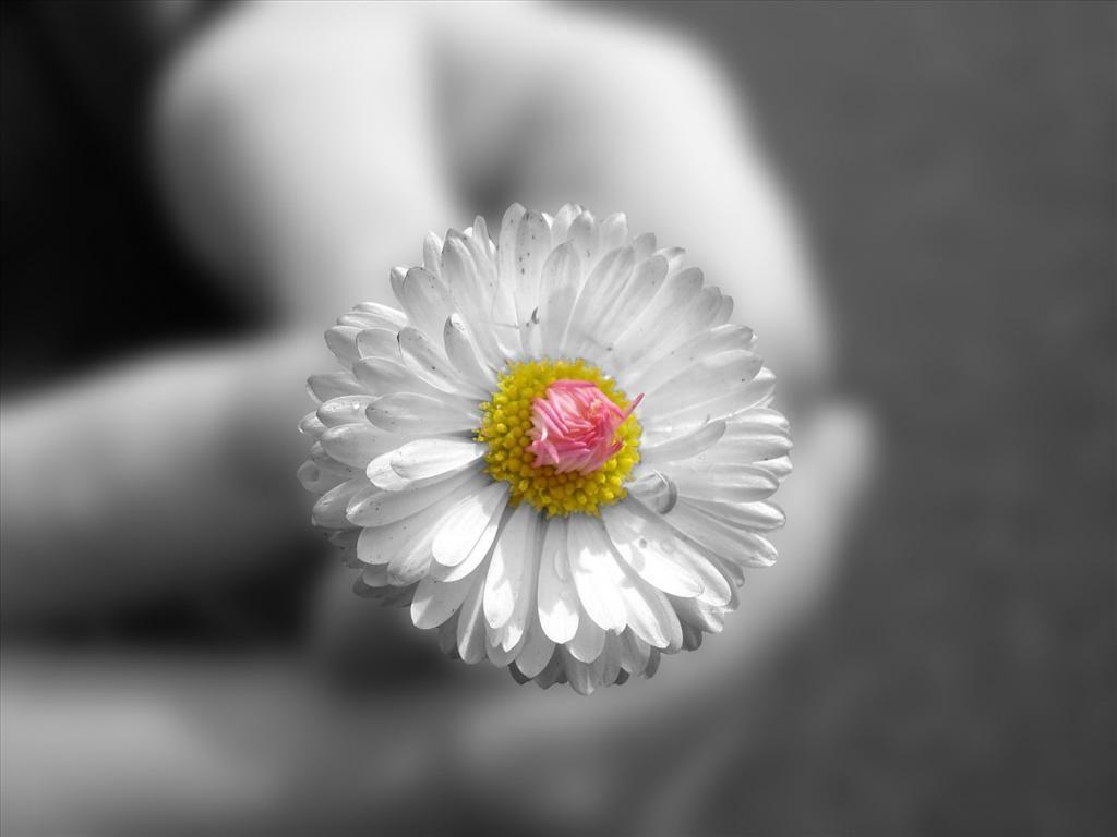 Fond D Ecran Fleur Blanche Fond D Ecran Fleur Blanche Papier Peint A Fleurs Fond D Ecran Ipad Air
