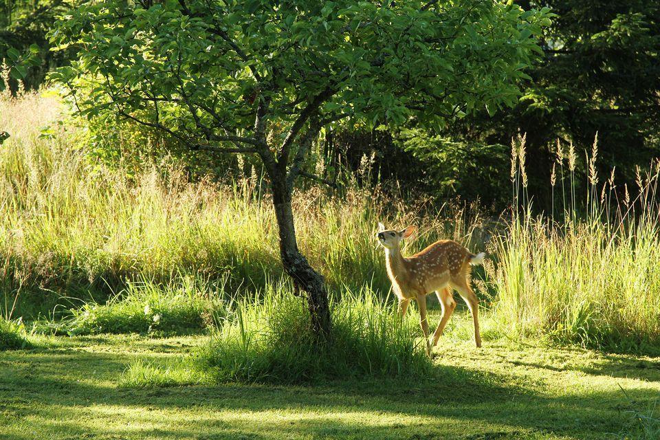 Little Bambi in the morning sun Kesäkuvakisa yle.fi by Pauli Koponen, Finland