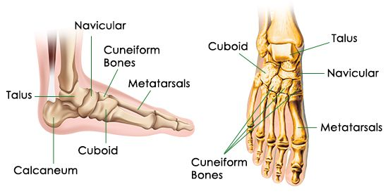Bones Of The Foot Diagram Science 8 Pinterest Diagram And Muscles