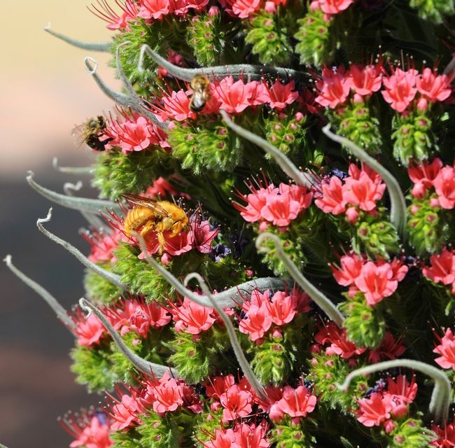 tower of jewels plant - Google Search