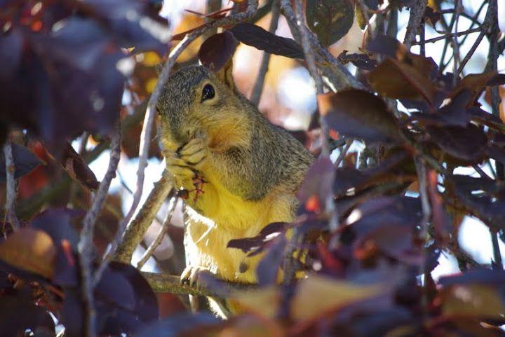 #squirrel #noisette
