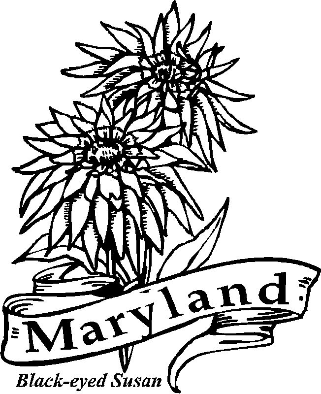 Printable Black Eyed Susan Coloring Pages Flag Coloring Pages