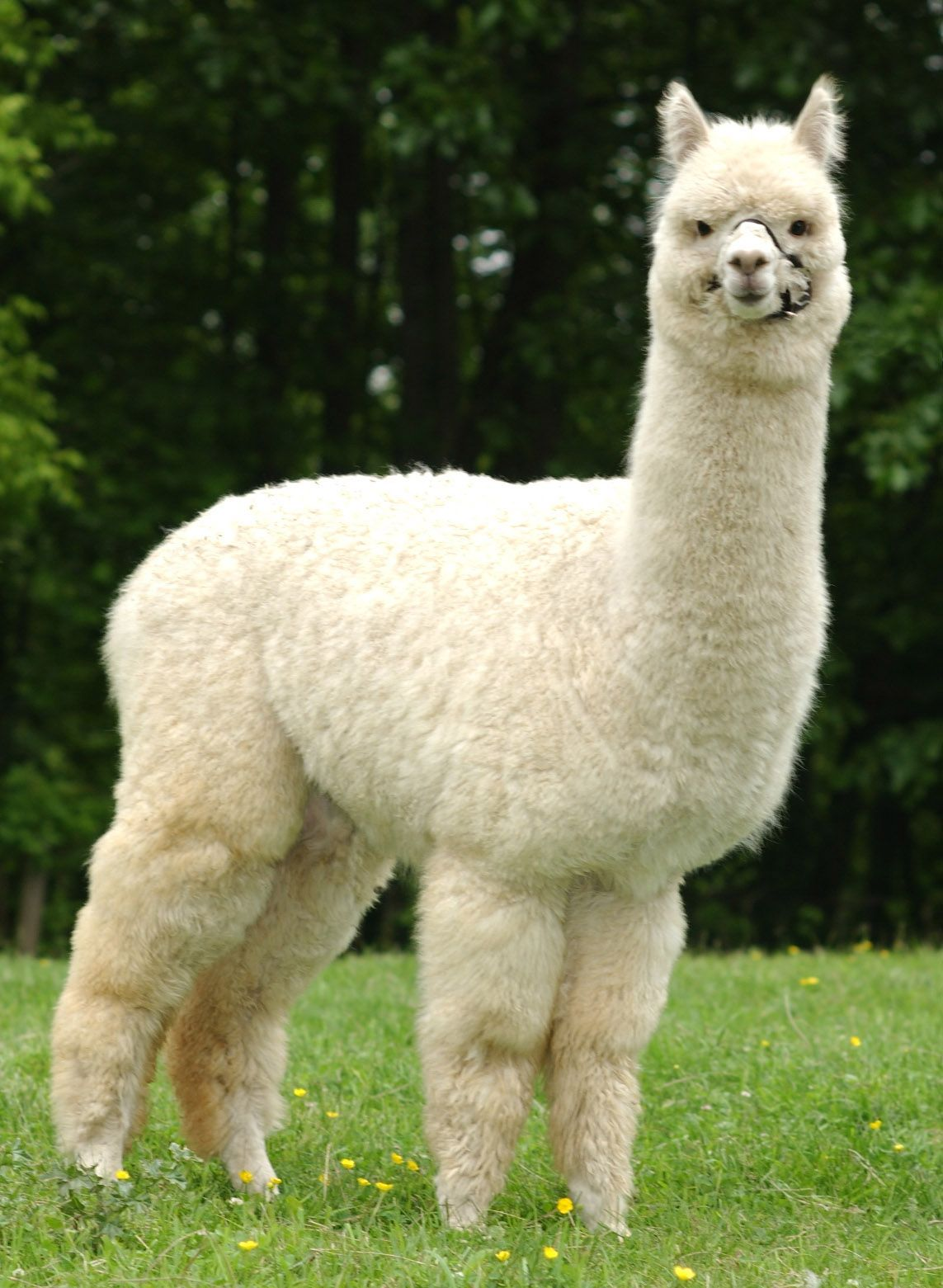 7fcb835f4abf3c eBay Selling Coach: What is Alpaca and Why Should eBay Sellers Care ...