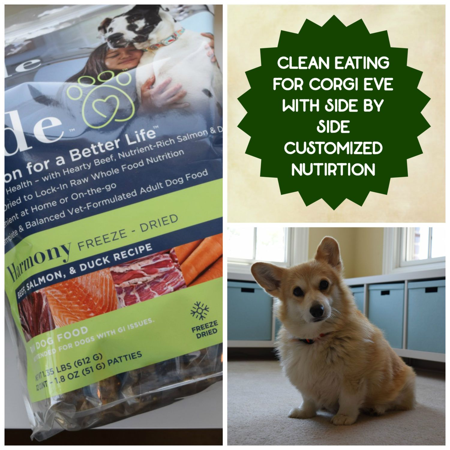 Clean Eating For Dogs Eve S Side By Side Nutrition Boost Natural Pet Food Dogs Eat