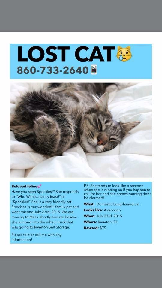 Ct Lost Pets Page Liked 8 Hrs Missing Riverton Ct Losing A