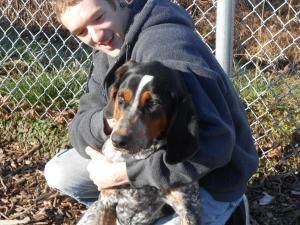 Chubbs Is An Adoptable Bluetick Coonhound Dog In Fremont Ohio The 98 00 Adoption Fee Includes Spay Or N Animal Companions Dog Adoption Animal Advocacy
