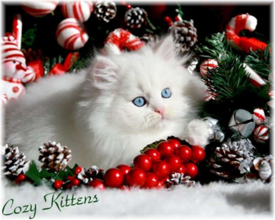 Christmas Cat Wallpaper | Cute Christmas Kitten Wallpapers | Free ...
