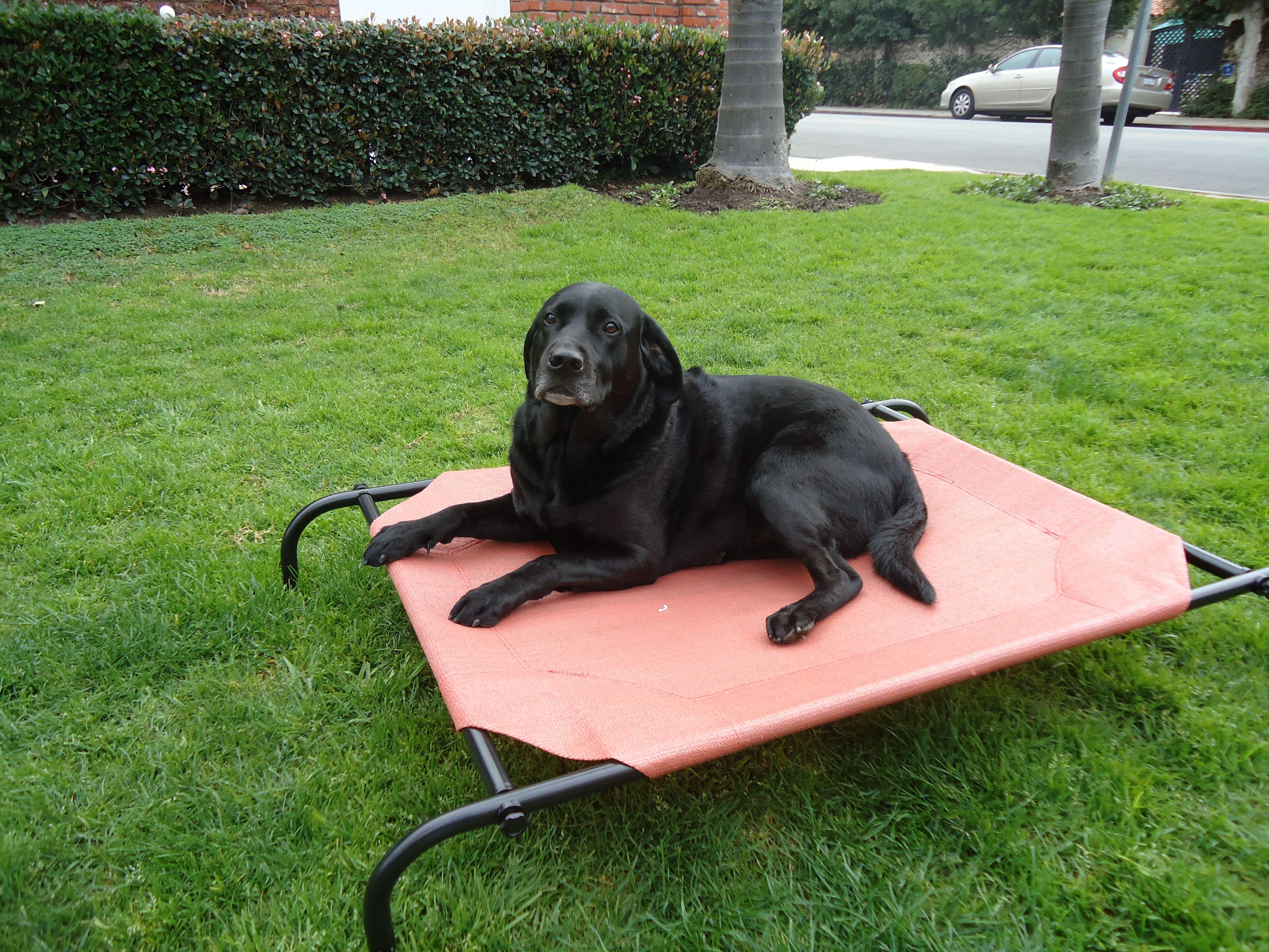 large elevated dog bed Pet bed, Pet beds, Cool dog beds