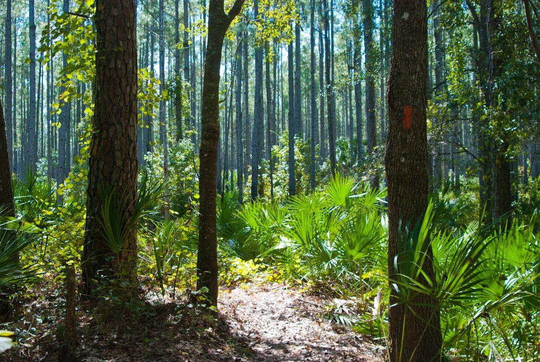 Ocala National Forest Hiking Trails