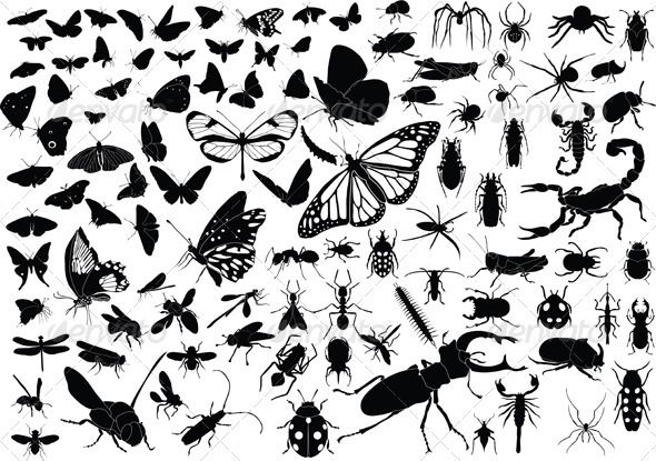 100 Insects  #GraphicRiver         100 vector silhouettes of insects (butterflies, bugs, flies, bees ets.)     Created: 12February13 GraphicsFilesIncluded: VectorEPS Layered: No MinimumAdobeCSVersion: CS Tags: animal #ant #bee #beetle #black #bug #bumble-bee #butterfly #dragon-fly #grasshopper #insect #lady-bug #locust #mosquito #moth #nature #paw #scorpion #silhouette #small #spider #sting #tattoo #tendril #vector #water-meter #white #wild #wing #zodiac