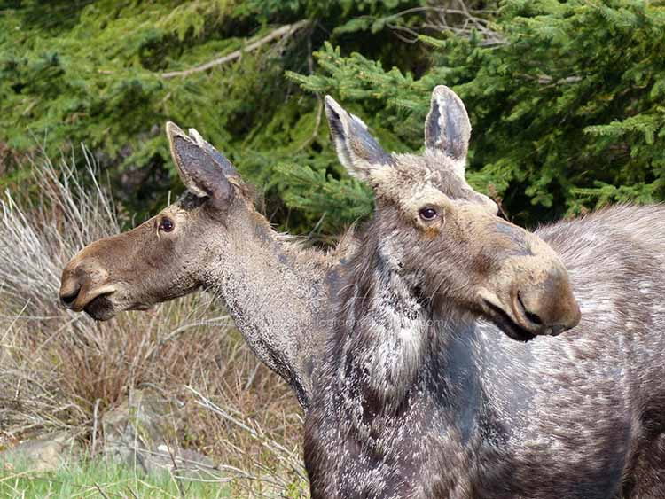 Human And Animal Mutations Were Caused By Chernobyl Chernobyl Chernobyl Disaster Animals