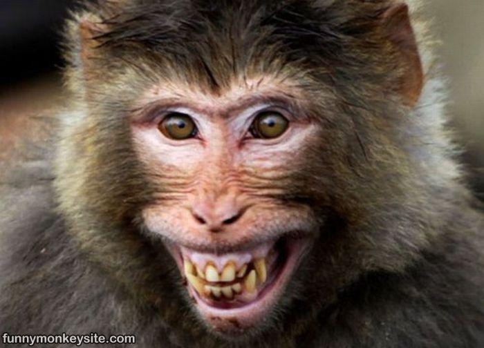Funny Meme Smiley : Funny smiling monkey face smile . . . laugh pinterest