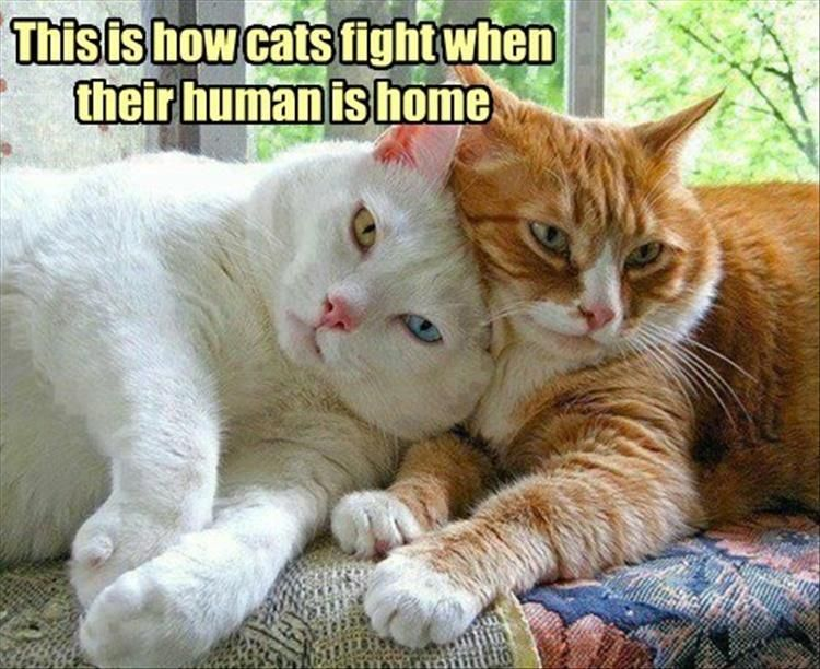 Funny Animal Pictures Of The Day 24 Pics Cute Cats Cats Kittens
