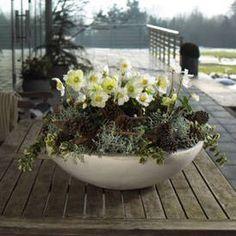 Zauberhafte Christrose: Winter-Bepflanzungen für Balkon und Terrasse #herbstdekoeingangsbereich