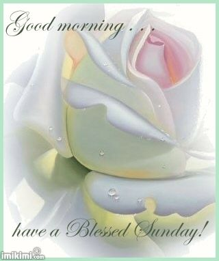 Good Morning, Have a blessed Sunday!