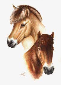Pferdeportrait - norwegisches Fjordpferd und Exmoorpony (Buntstift, A3, Jana Luther)