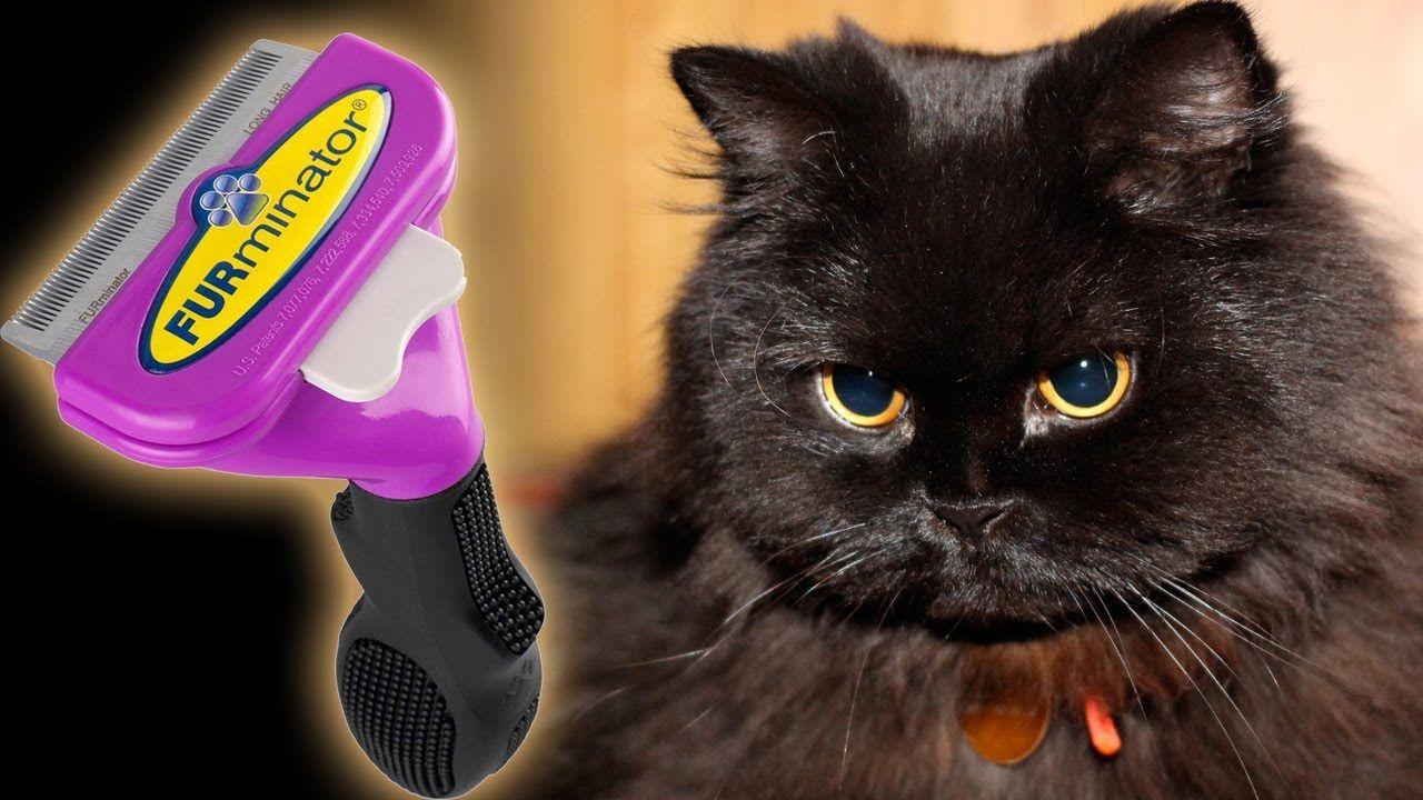 Furminator And My Black Persian Cat Batman Cats Persian Cat Cat Meeting
