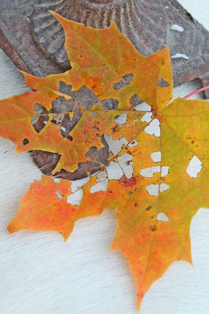 VIBEKE DESIGN: Høstens magi
