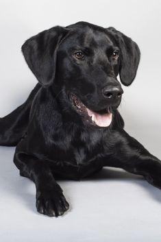 Pin Von Monster Backe Auf Hund Tierbilder Hunde Tiere
