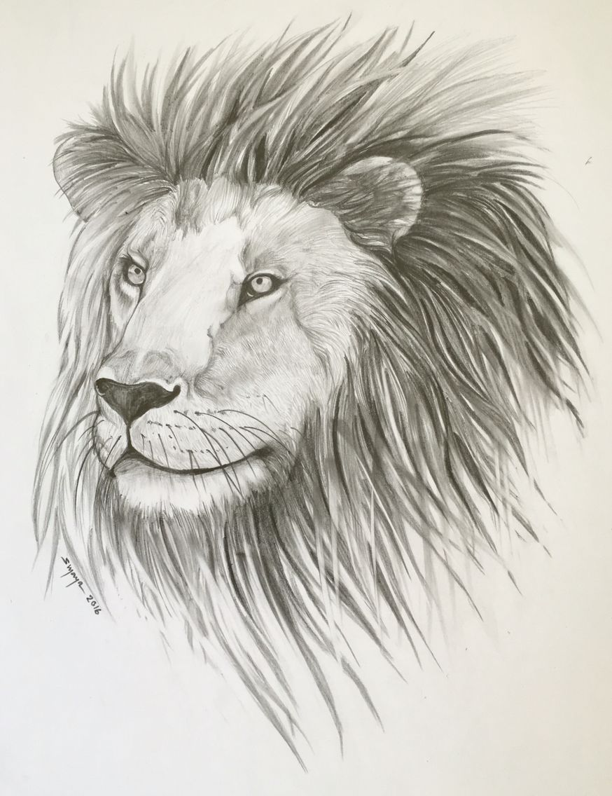 King of the jungle lion drawing pencil