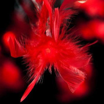 Blaze On Fluffy Feather Fairy Lights Red 20 Led Amazon Co 400 x 300