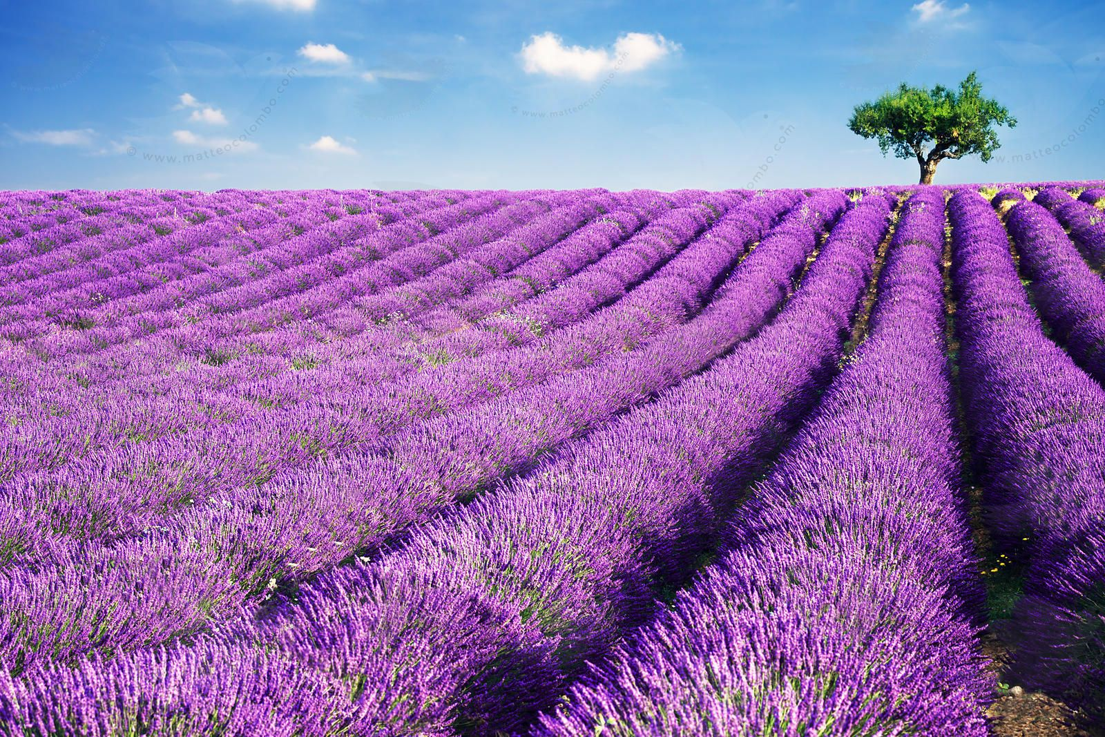 Matteo Colombo Travel Photography | Lavender field and ...