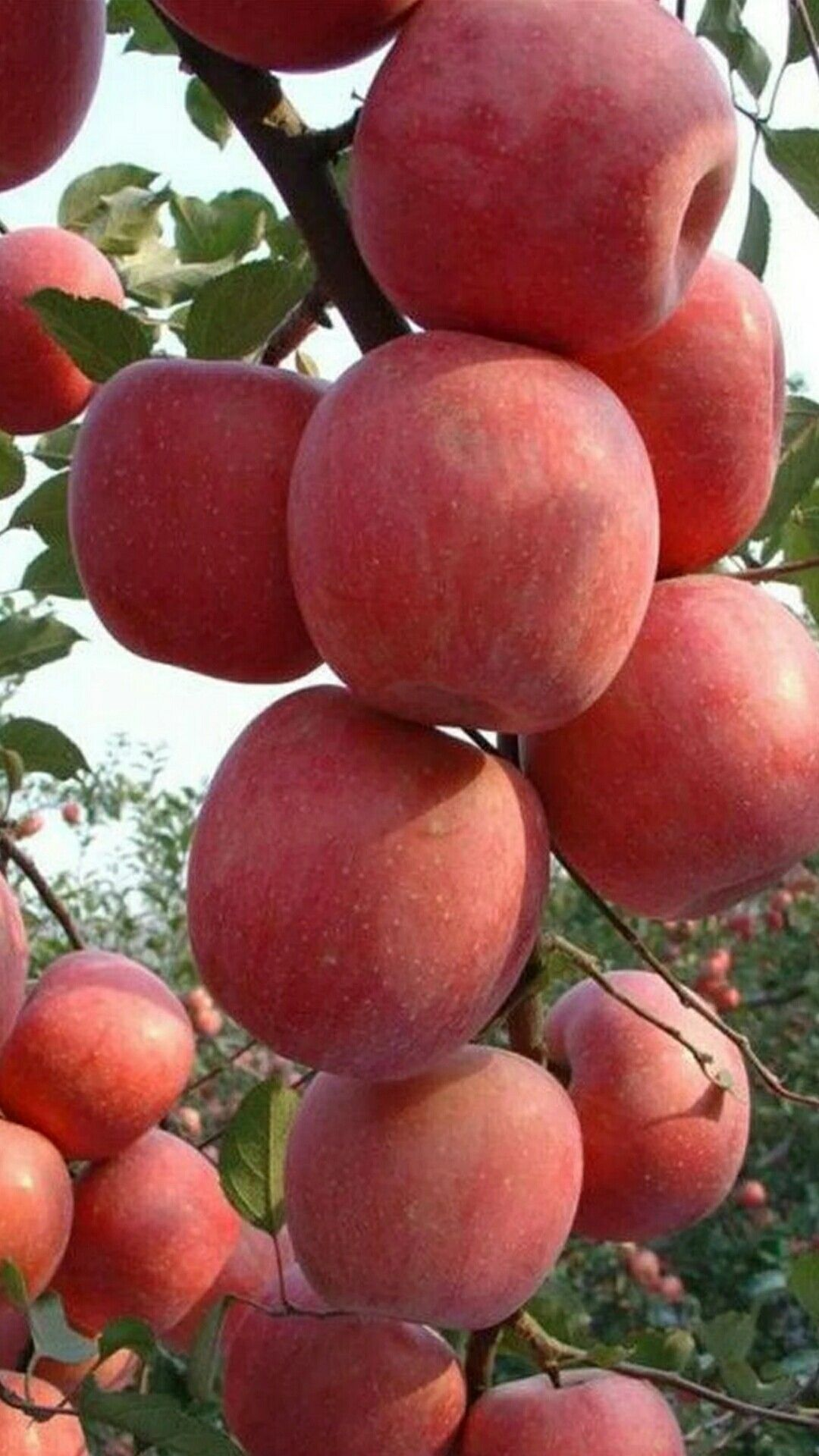 Pomegranate Deserts Drinks Fruit Postres Dessert Drink Desserts Garnet