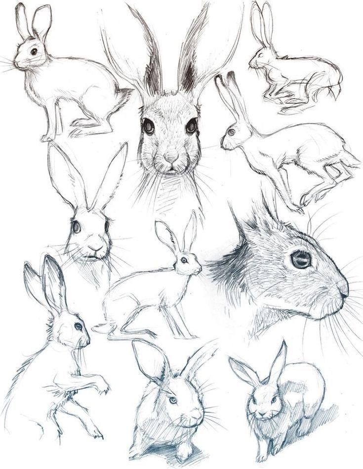 Photo of 40 kostenlose und einfache Tierskizze – Ideen und Inspiration beim Zeichnen -,  …