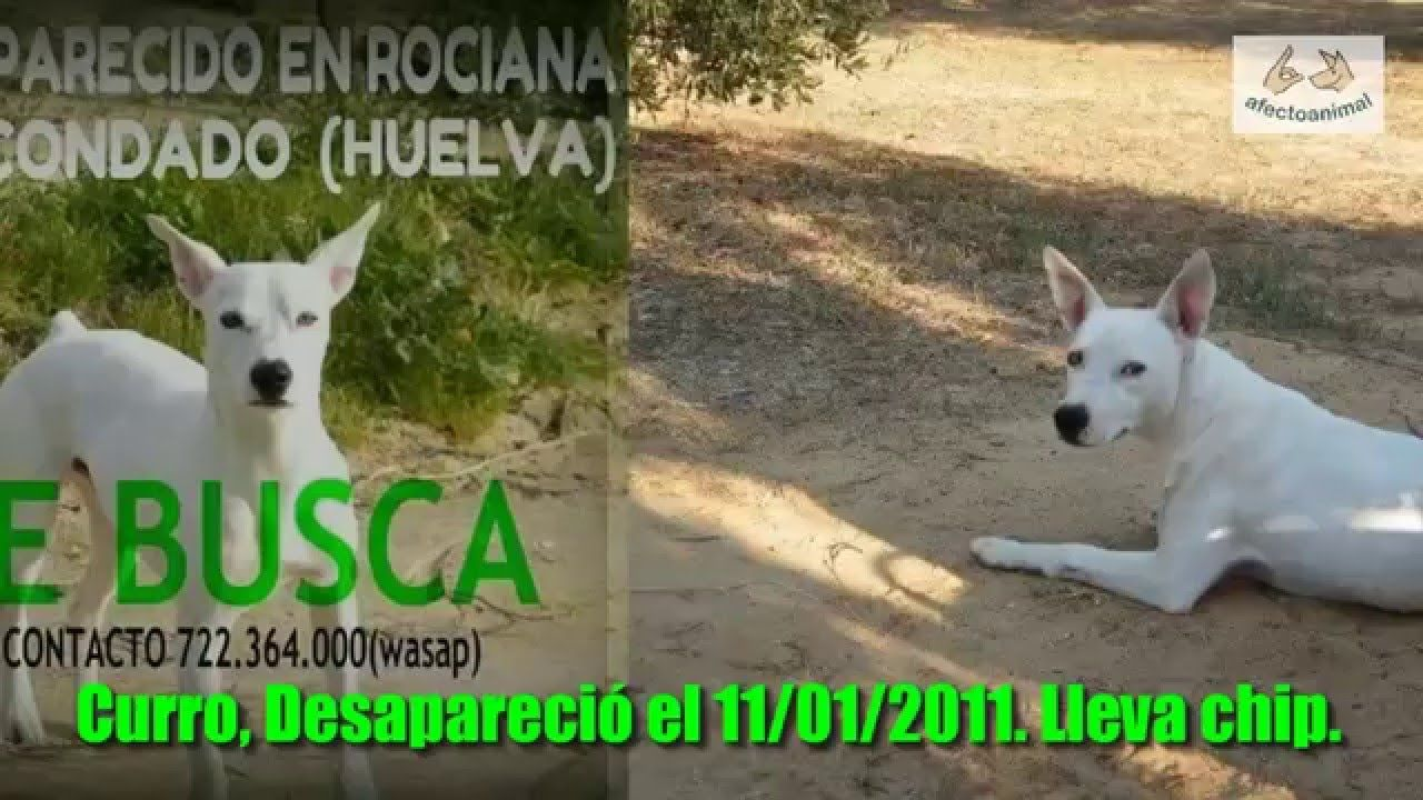 Ayuda a encontrar a los perros más buscados de España - Afecto Animal.
