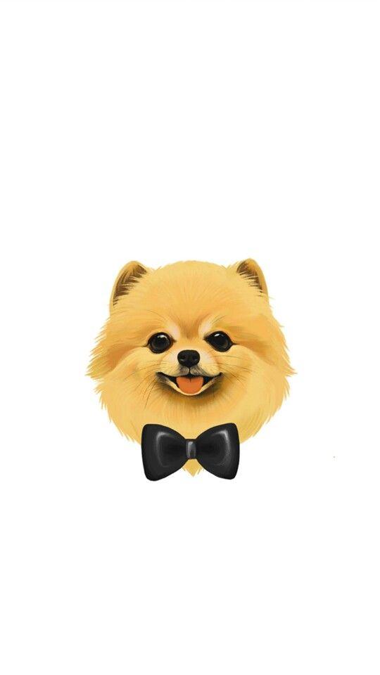 Pomeranian Wallpaper Animals Pinterest Dog Wallpaper