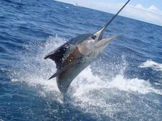 Photo of Dream On Sport Fishing - Private Charters