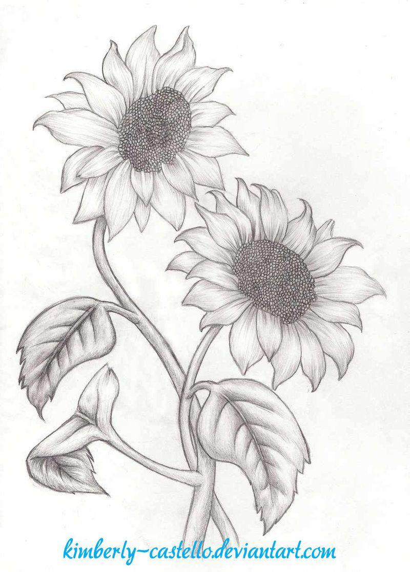 Girasoles Boceto De Kimberly Castello Girasoles Dibujo Flores