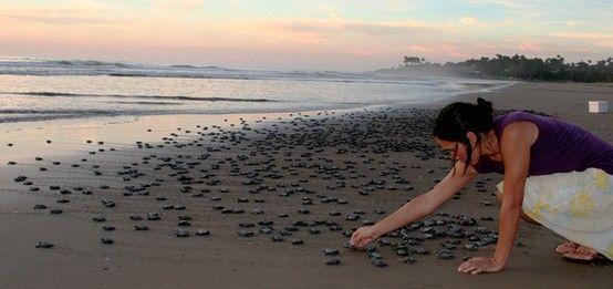 Baby sea turtles release at Riviera Nayarit